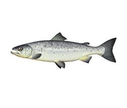 Liste des poissons cacher